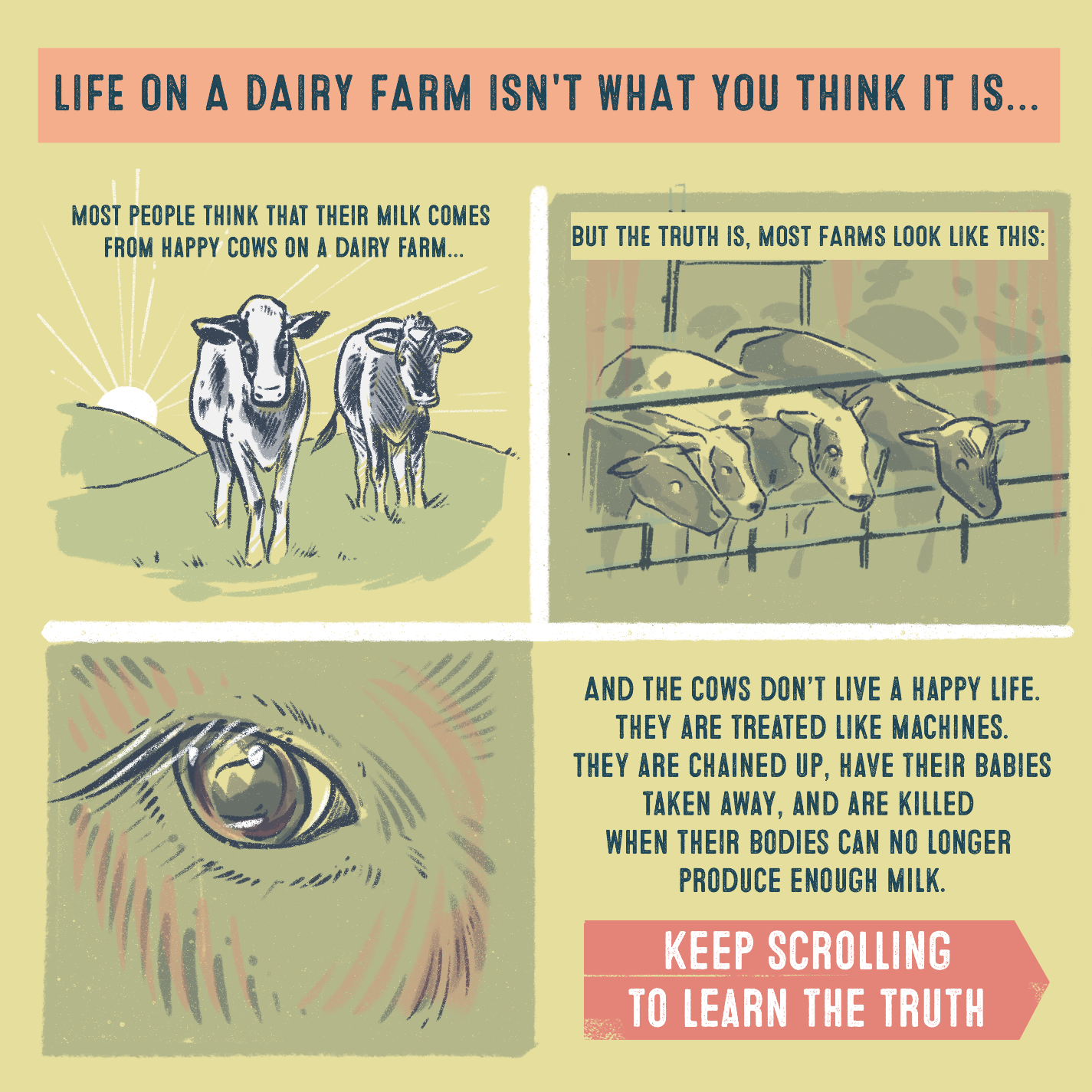 And the cows don't live a happy life. They are treated like machines. They are chained up, have their babies taken away, and are killed when their bodies can no longer produce enough milk.  Keep scrolling to learn the truth