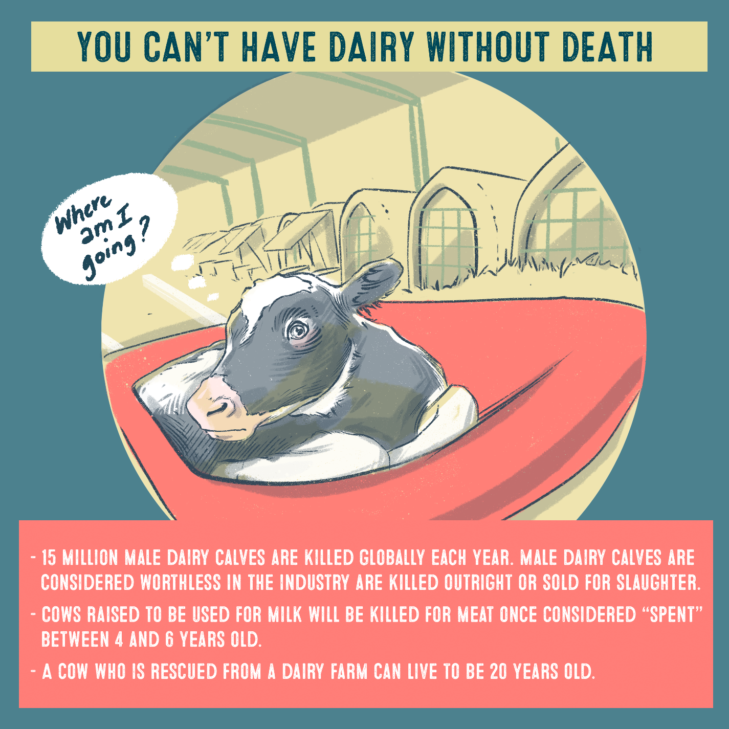 You can't have dairy without death Where am I going? 15 million make dairy calves are killed globally each year. Male dairy calves are considered worthless in the industry are killed outright or sold for slaughter. Cows raised to be used for milk will be killed for meat once considered spent between 4 and 6 years old.  A cow can live up to 20 years old. They don't get to reture, or live out their full lives as they deserve.